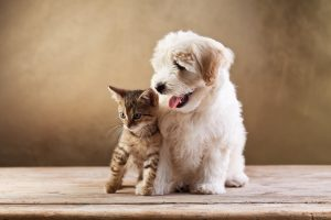 New Pet Owners - Puppy and Kitten